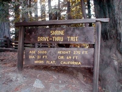 Shrine Drive-Thru Tree image. Click for full size.