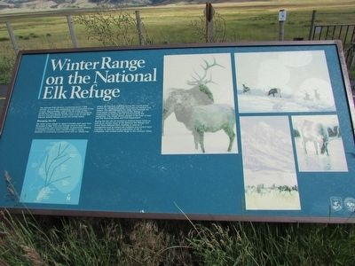 Winter Range on the National Elk Refuge Marker image. Click for full size.