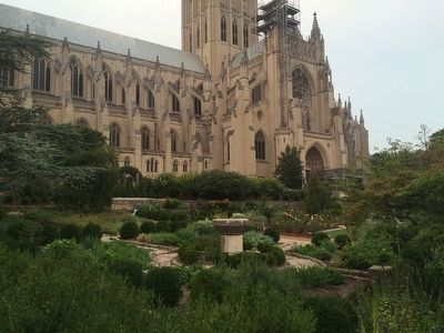 Ellerslie boxwoods at the National Cathedral image. Click for full size.