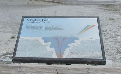Crested Pool Marker image. Click for full size.