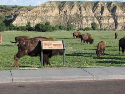 Bison at the Beef Corral Bottom Marker image. Click for full size.