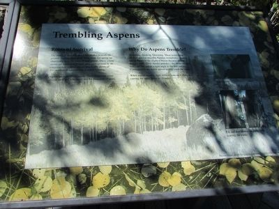 Trembling Aspens Marker image. Click for full size.