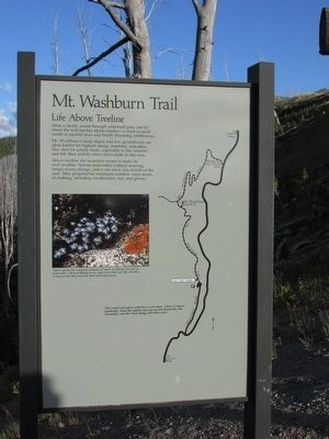 Mt. Washburn Trail Marker image. Click for full size.