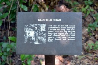 Old Field Road Interpretive Sign image. Click for full size.