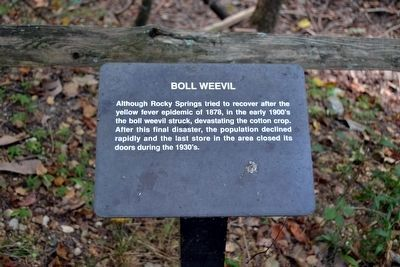 Boll Weevil Interpretive Sign image. Click for full size.