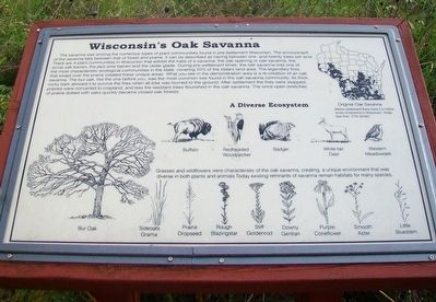 Wisconsin's Oak Savanna Marker image. Click for full size.