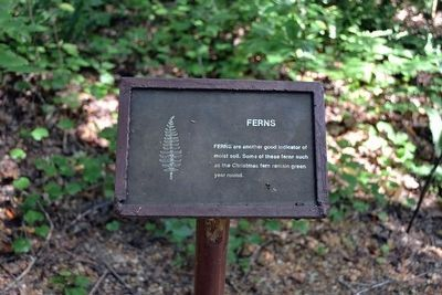 Ferns Interpretive Sign image. Click for full size.