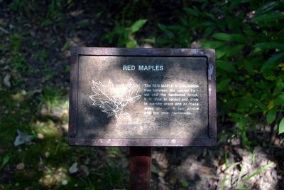 Red Maples Interpretive Sign image. Click for full size.