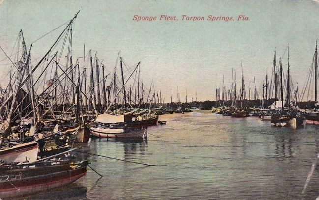 <i>Sponge Fleet, Tarpon Springs, Fla.</i> image. Click for full size.