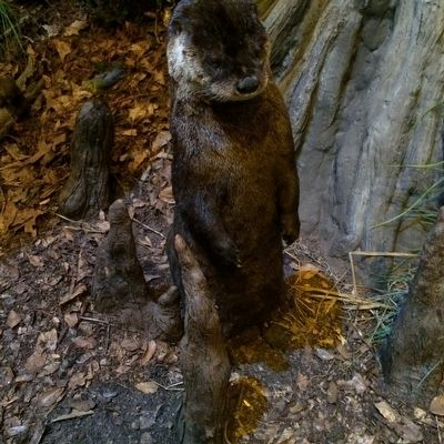 River Otter image. Click for full size.