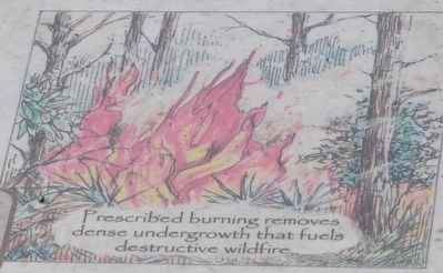 Prescribe Burning image. Click for full size.