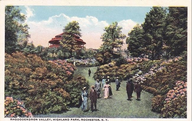 Rhododendron Valley, Highland Park, Highland Park, N.Y. image. Click for full size.