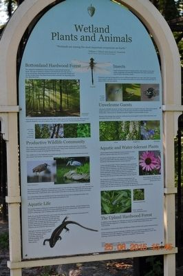 Wetland Plants and Animals Marker image. Click for full size.