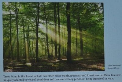 Bottomland Hardwood Forest image. Click for full size.