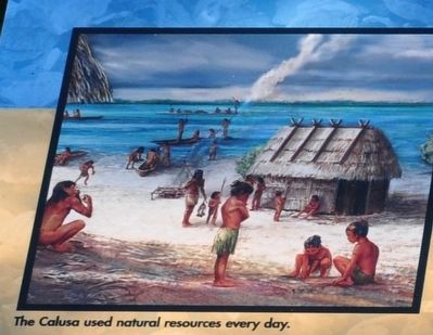 The Calusa used natural resources every day. image. Click for full size.