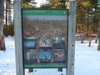 Exploring The Pinelands Marker image. Click for full size.