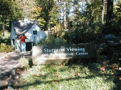Entrance to the Sturgeon Viewing area image. Click for full size.