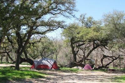 Campsite among ancient oaks along Onion Creek image. Click for full size.