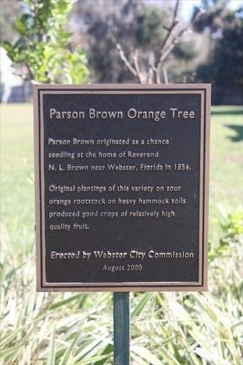 Parson Brown Orange Tree Marker image. Click for full size.