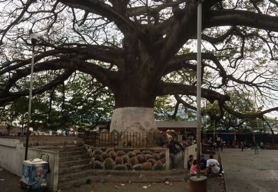 The Ceiba, Guatemala's National Tree Marker image. Click for full size.