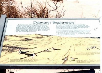 Delaware's Beachnesters Marker image. Click for full size.
