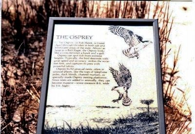 The Osprey Marker image. Click for full size.