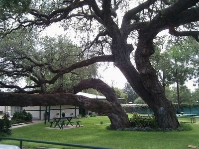 Enjoy a picnic under the Old Hanging Tree. image. Click for full size.
