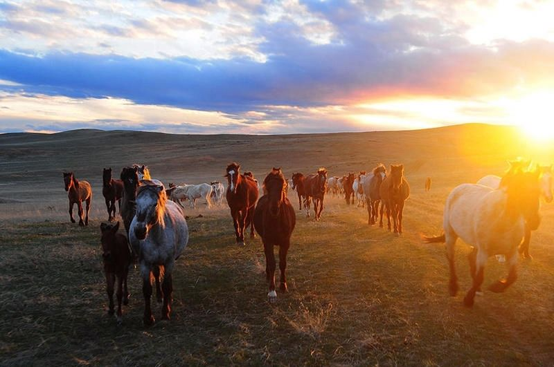 Wild Horses in Wyoming image. Click for full size.