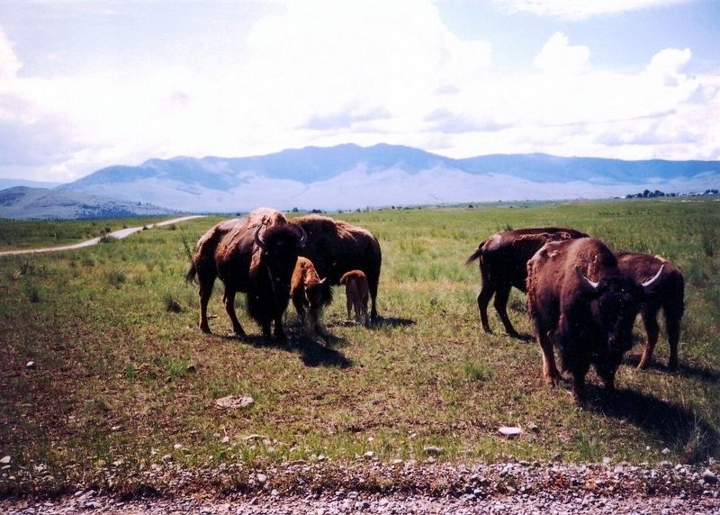 The National Bison Range image. Click for full size.
