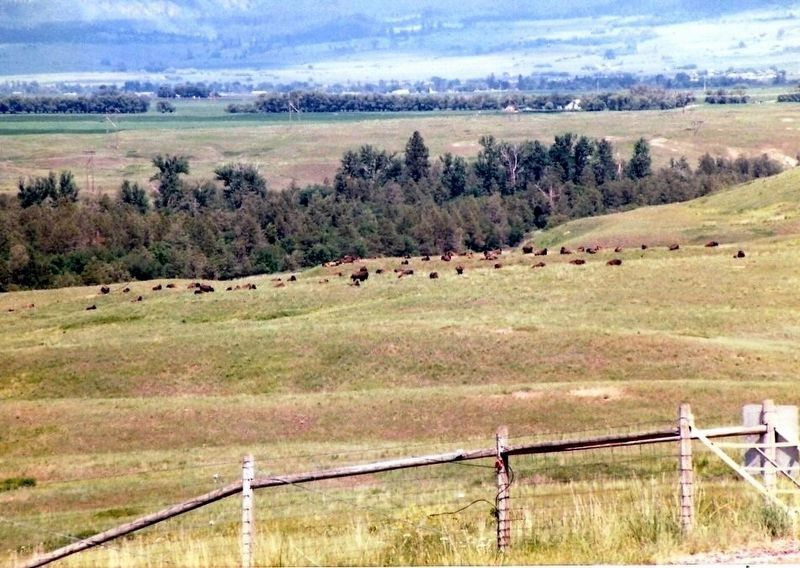 The National Bison Range-Bison Herd in the distance image. Click for full size.