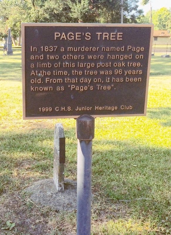 Page's Tree Marker image. Click for full size.