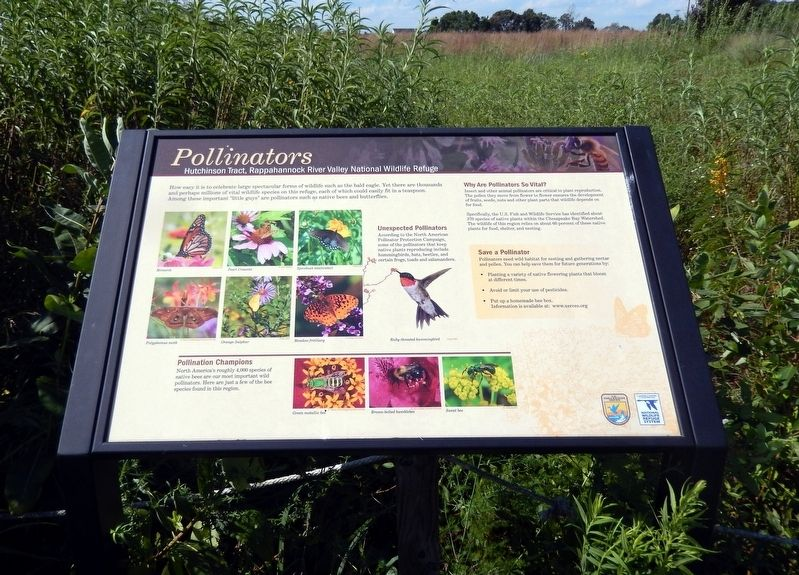 Pollinators Marker image. Click for full size.