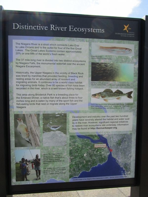 Distinctive River Ecosystems Panel image. Click for full size.