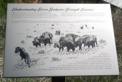 Understanding Bison Behavior Brought Success Marker image. Click for full size.