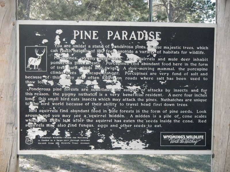 Pine Paradise Marker image. Click for full size.