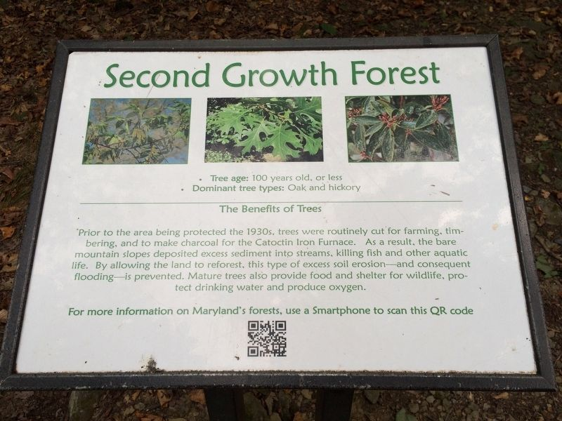 Second Growth Forest Marker image. Click for full size.