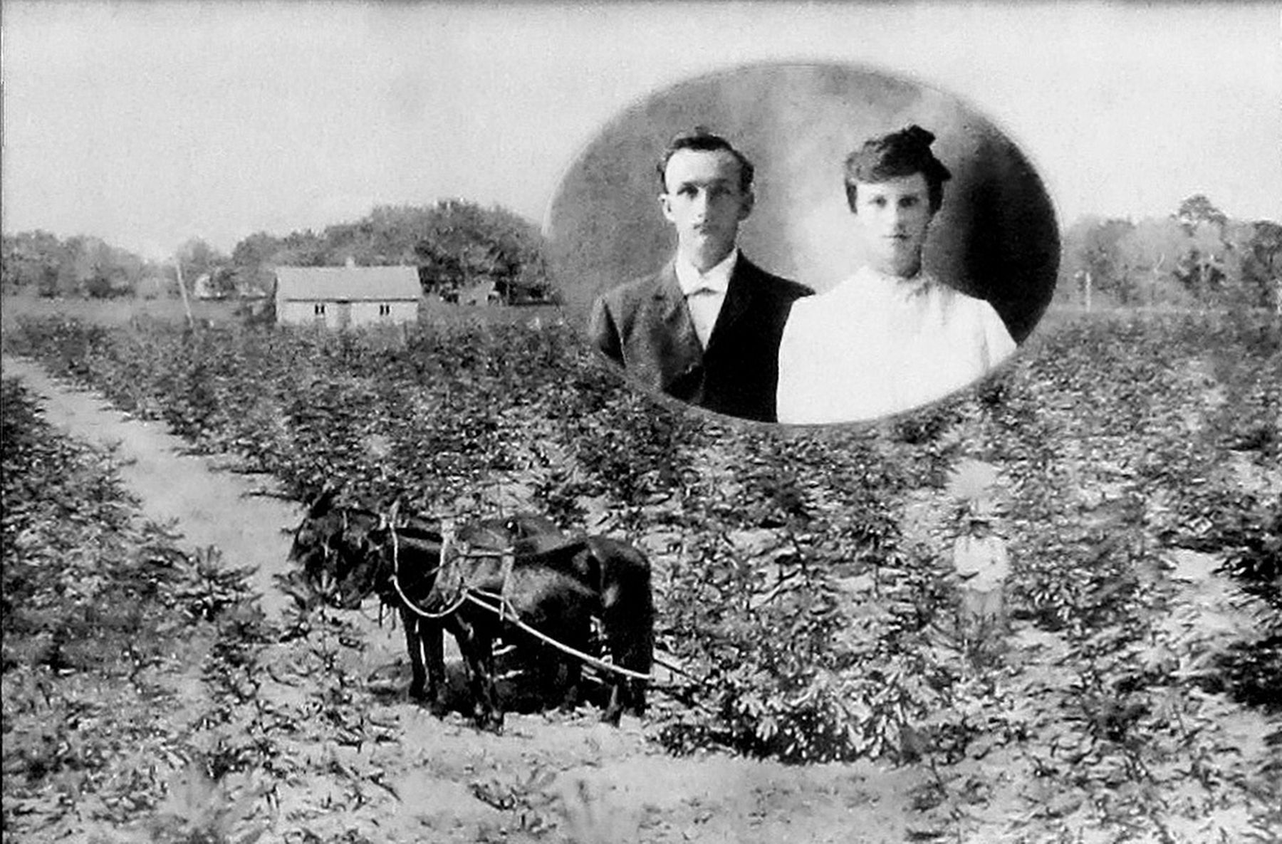 Copied from the Main Street Fig Orchards Marker image. Click for full size.