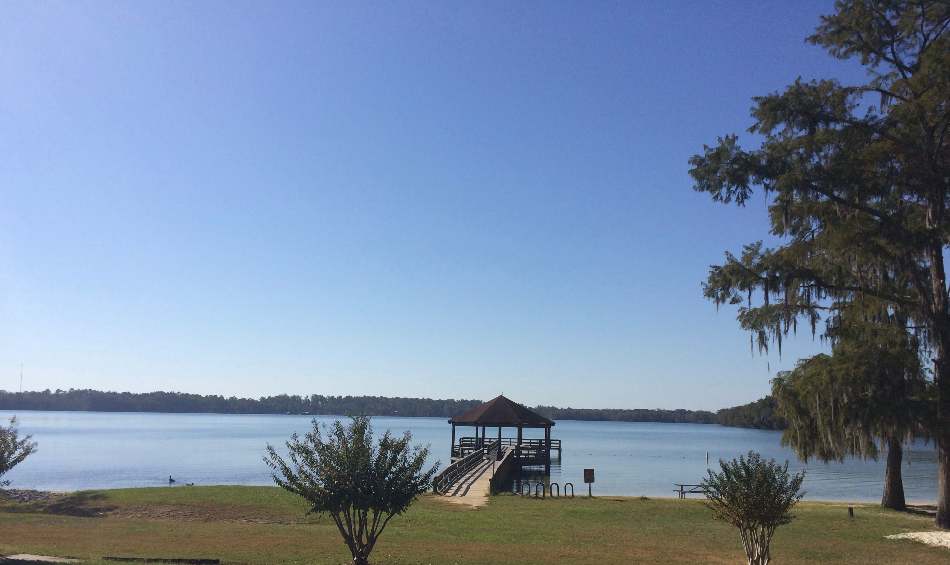 View of Lake Jackson from north end of lake at Florala State Park.