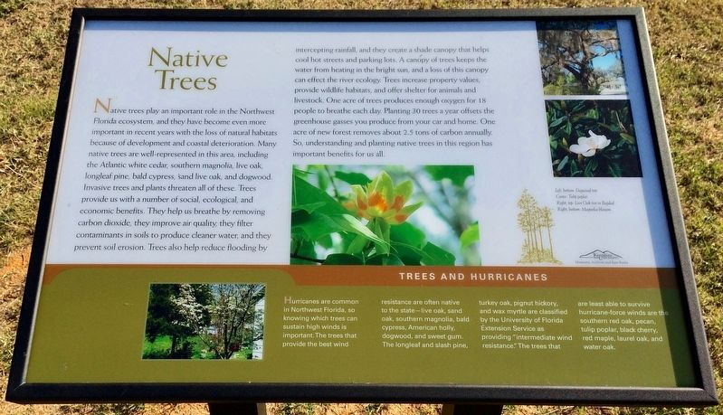 Native Trees Marker image. Click for full size.