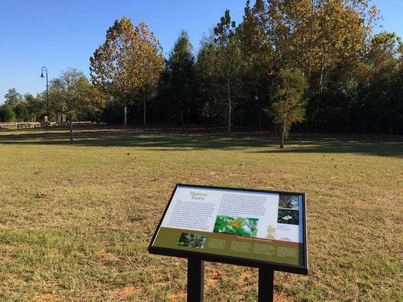 Native trees and marker at the Bagdad Mill Site. image. Click for full size.