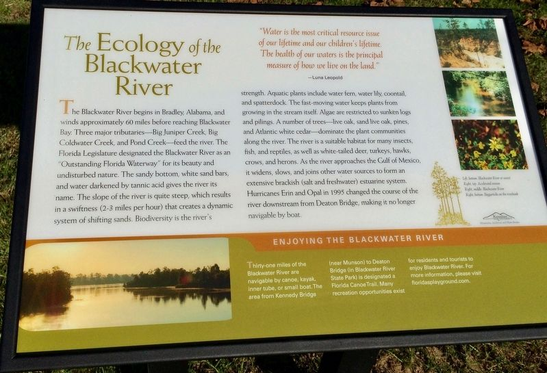 The Ecology of the Blackwater River Marker image. Click for full size.