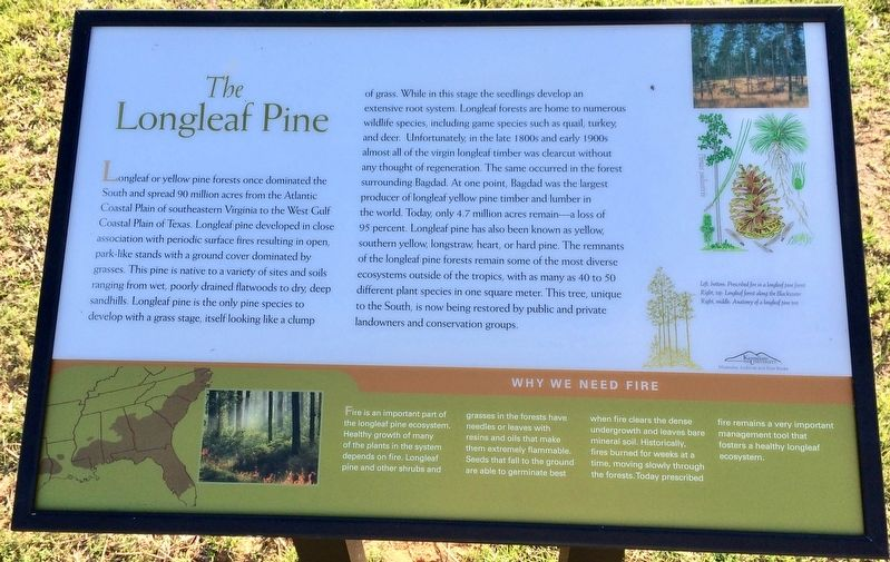 The Longleaf Pine Marker image. Click for full size.