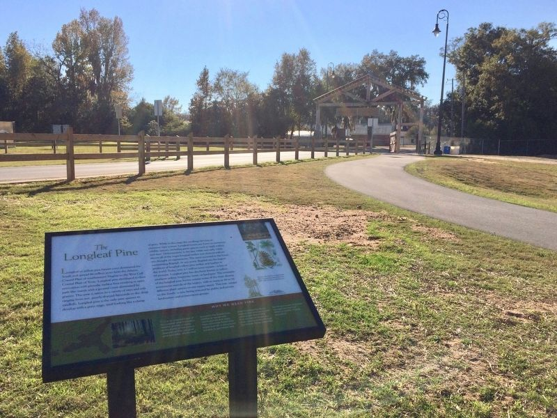 The Longleaf Pine Marker near entrance to park. image. Click for full size.