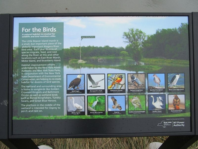 For the Birds Marker image. Click for full size.