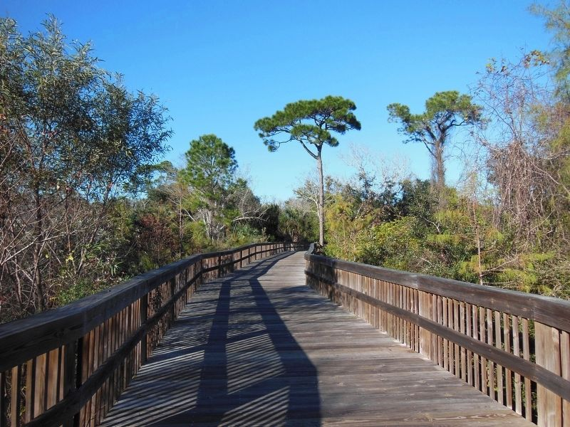 Lehigh Trail Boardwalk image. Click for full size.
