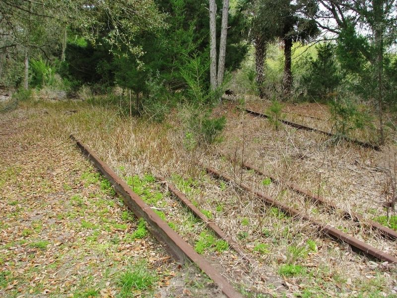 Lehigh Trail: Overgrown Track & Rail Remnants image. Click for full size.