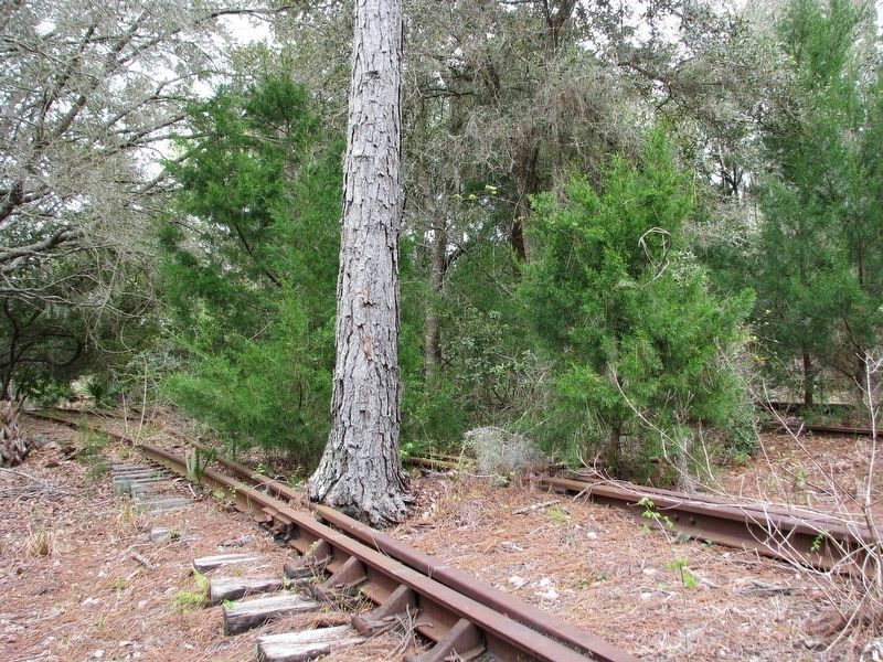 Lehigh Trail: Tree Inside Old Railroad Tracks image. Click for full size.