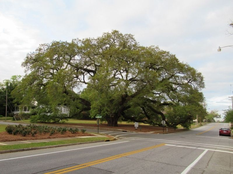 The Big Oak Tree image. Click for full size.
