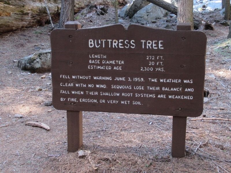 Buttress Tree Marker image. Click for full size.
