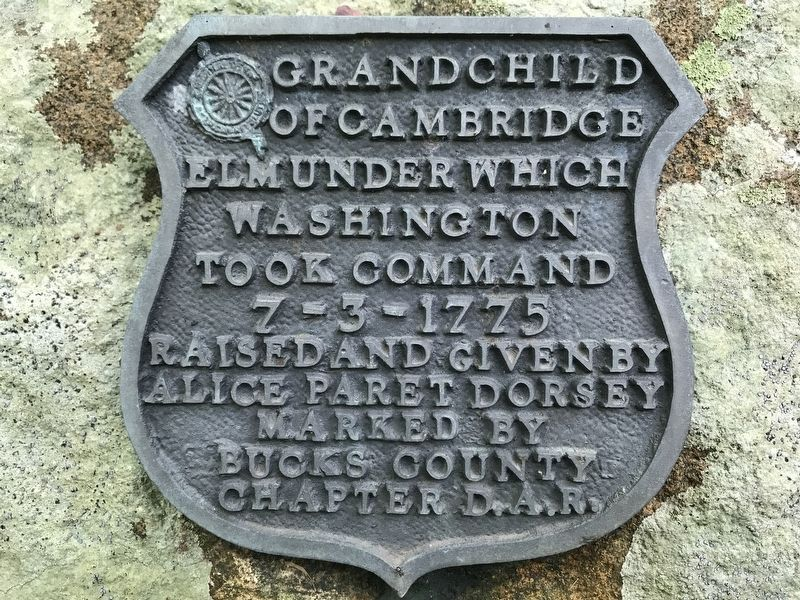 Grandchild of Cambridge Elm Marker image. Click for full size.